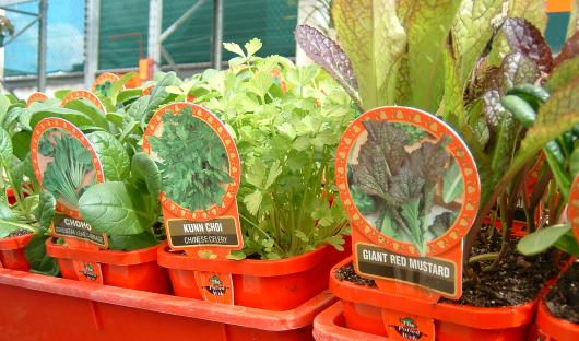 Plants_slider