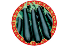 Eggplant_Jap Long Tom_web