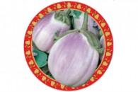 Eggplant_Violet Prince_web