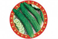 Oriental cucumber_web