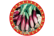 Red Bunching Onion_web