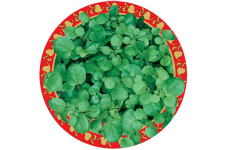Watercress_web
